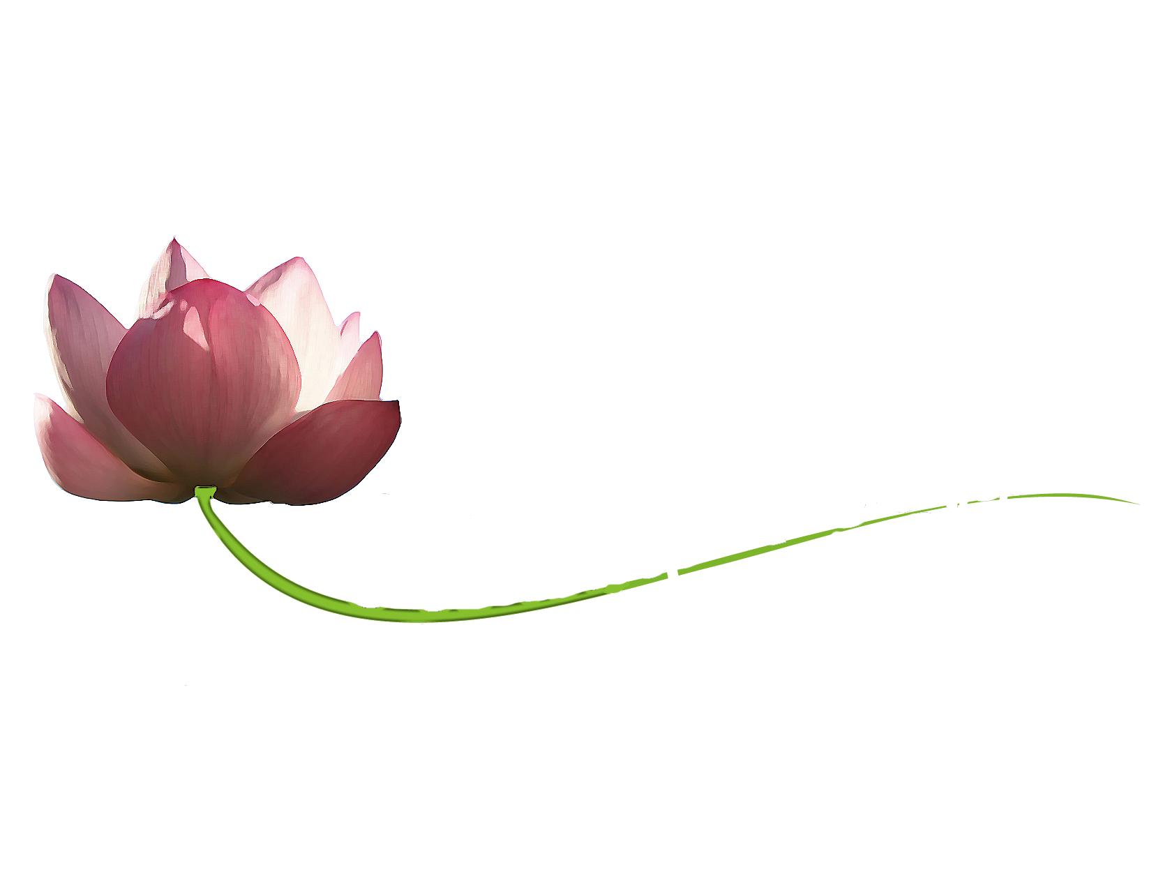 logo_lotus_blanc